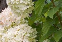 Flores, flores, jardins e afins...1