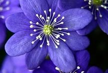 Purple flowers / What more beutiful than purple