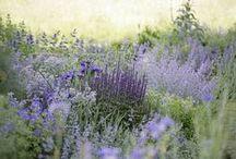 ~ garden