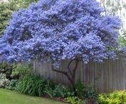 Au jardin / Idées pour le jardin , coups de coeur pour des plantes ...