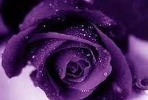 Roses extraordinaires / roses de contes de fées ?? peut-être