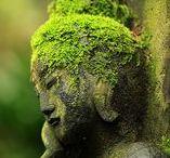 Sculptures  & mousses / Le temps a passé , laissant derrière lui la verdure qui a recouvert ses choses oubliées ..