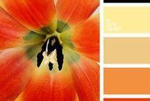 Couleurs : peps' / Ce sont ces couleurs que l'on remarque , qui attire l'oeil , qui nous donne bonne mine , ou bon moral ...... on adore .