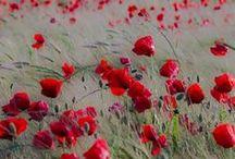 Fleurs par milliers / créé par la nature ou la main de l'homme : palette de couleurs