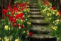 Escaliers fleuris