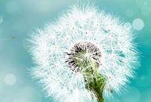 flors / by Àngels Ponce