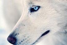 Animals / by Karmen Owen