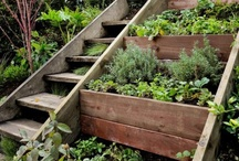 Gardens / Some amazing gardening ideas and inspirations