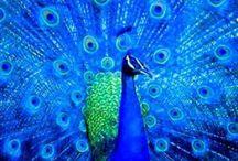 Birdie LOVE / ...little birdies make me happy...along with their sweet little tunes ♫♪...