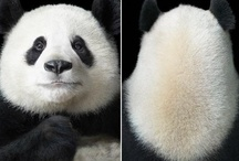 More Than Human: Animal Portraits / by photographer Tim Flach / by Alexandru Stoica