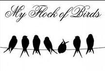 MY FLOCK of BIRDS