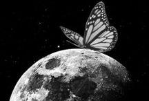 Butterfly  •*¨*•.¸¸♥ / ღ