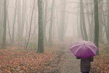 Plum autumn •*¨*•.¸¸♥