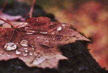 Red Autumn •*¨*•.¸¸♥