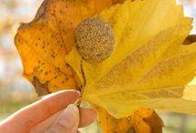 Orange Autumn •*¨*•.¸¸♥