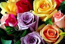 Roses / Die Königin der Blumen: Die Rose in ihrer unendlichen Vielfalt und Anmut