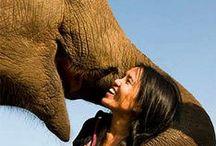 Fair Trade Animal Lovers