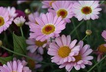 Luontoa ja kukkasia