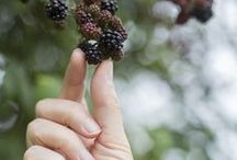Berries •*¨*•.¸¸♥