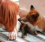 Foxes •*¨*•.¸¸♥