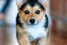 Corgis Are The Best / by Sandra Green