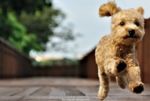 Animals & Pets / ― dogs, cats, nature