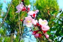 ♡ Beautiful Flower ♡
