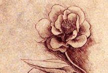 Leonardo da Vinci's Drawings