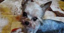 Maja - Gucio - Kuleczka / psy u mnie w domu
