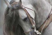 Lovak AnMo / Vegyesen ló fajták, melyeken kecsességük, szépségük ábrázolják.