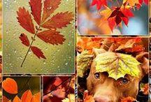 Autumn AnMo / Ősz/ Autumn