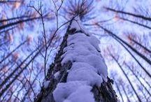 Winter AnMo / Tél évszak