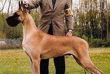 Dog AnMo / Dog