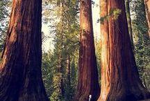 Erdő AnMo / Erdők, szép tájképek