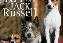 Jack Russel terrier AnMo / Jack Russel terrier