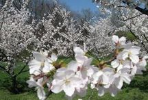 Flowers -flori / imagini proprii si/sau selectate