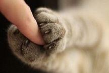 catsCATScats / CATS!
