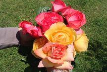 Cosecharás tu siembra! / Flores, vida y naturaleza