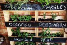 Herb Gardening / Gardening herbs.