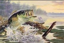 Bass Fish Art / If you're a bass fisherman you should check out this board. We've got plenty of Bass Fish paintings to make you happy.