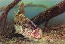 Largemouth Bass Fish Paintings / Largemouth Bass fish paintings available for sale on our website.