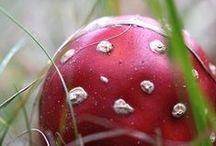 Organic / nature