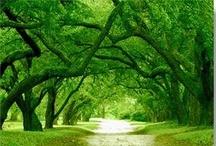 ~~~Beauty Of Green~~~