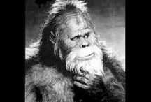 "☆Sasquatch☆ / A board dedicated to ""The Big Guy"", and all his relatives. (Yeti, Abominable Snowman, Skunk Ape, etc...) Humor, stories, pictures, anything related.  / by J. Kennedy"