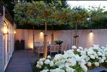 Strike a posie  / Garden ideas for Hubert Grove