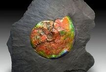 The Beauty of Fossils / These are some of the wonderful examples of Mother Nature apply her art to fossils.