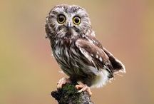 Owls, owls are cool!