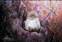 Birds / just beautiful Bird Photography   artists included  -Fuyi Chen