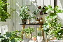 Garten, Balkon & Pflanzen / Alles rund um Pflanzen und Blumen - ob im großen Garten oder auf dem kleinen Balkon - Entdeckt euren grünen Daumen!