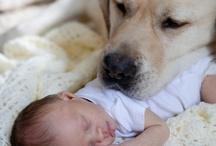 Labrador i dzieci....